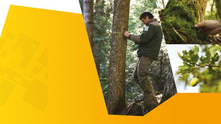 Mémento 2019 de l'inventaire forestier